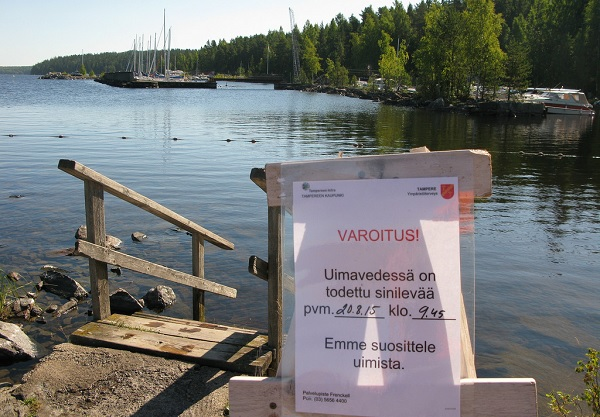 Alerta alga verdeazulada Tampere