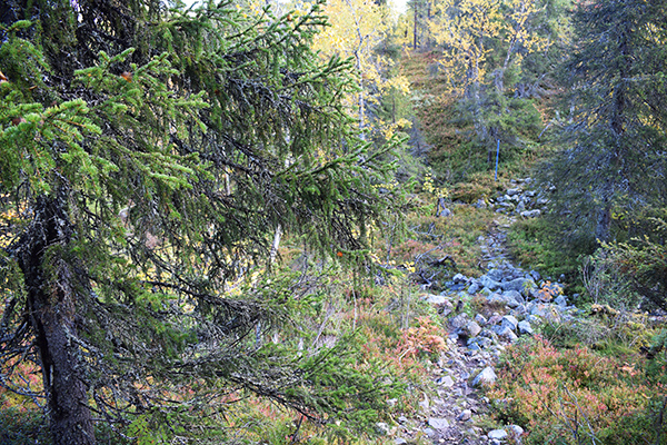 Excursión bosque Laponia