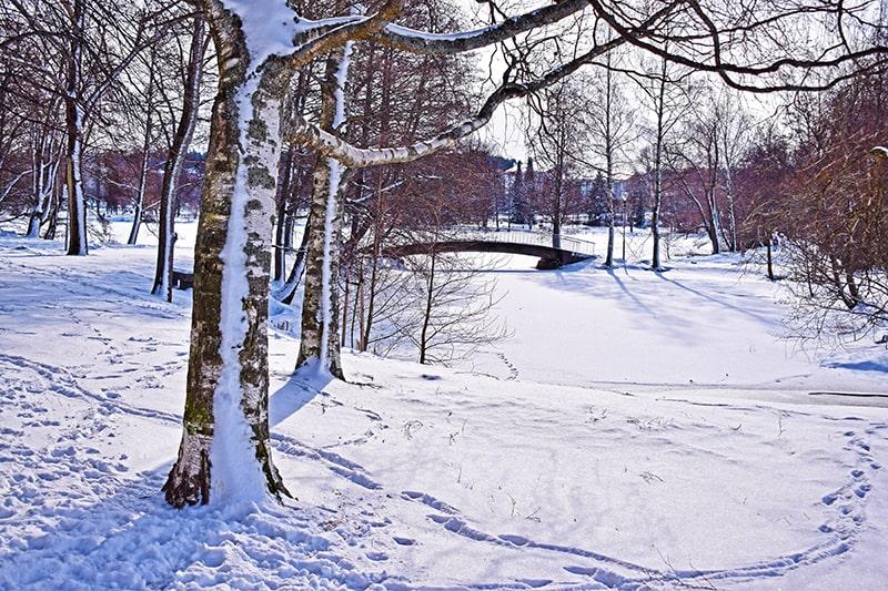 Nieve invierno Finlandia