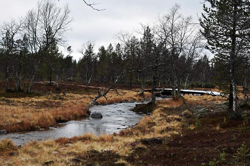 naturaleza Laponia