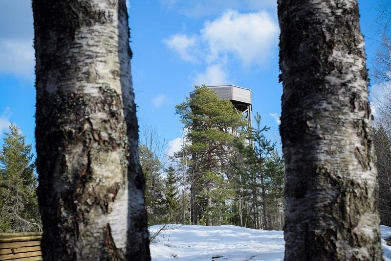 torronsuo torre observacion